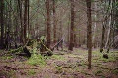 Пень дерева в лесе Стоковые Фото