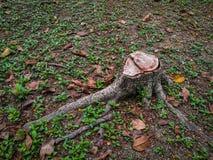 Пень дерева в лесе Стоковое Изображение RF