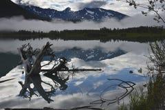 Пень дерева в озере Стоковые Фото