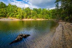 Пень дерева в озере Wylie, на природном заповеднике McDowell, в Charlo Стоковая Фотография RF