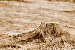 Пень дерева в парке Стоковые Изображения