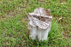 Пень дерева в парке Стоковое Фото