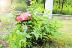 Пень дерева в форме пластинчатого гриба мухы внутри куста Стоковое Изображение RF