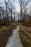 Пень дерева и свой длинный корень Стоковая Фотография
