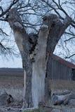 Пень дерева и старое сельскохозяйственное строительство в рано утром Стоковая Фотография
