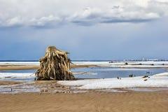 Пень дерева на банке Стоковая Фотография