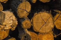 Пень дерева на заходе солнца Стоковое фото RF