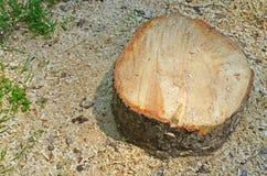 Пень дерева на зеленой траве Стоковое фото RF