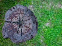 Пень дерева на зеленой траве Стоковые Фотографии RF