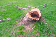 Пень дерева на зеленой траве Стоковое Изображение RF