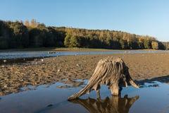 Пень дерева на озере Стоковая Фотография RF