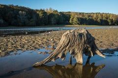 Пень дерева на озере Стоковые Фотографии RF
