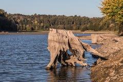 Пень дерева на озере Стоковые Фото
