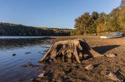 Пень дерева на озере Стоковое Изображение RF