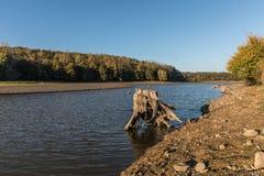 Пень дерева на озере Стоковое Изображение