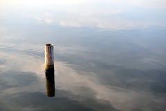Пень дерева на озере Стоковые Изображения