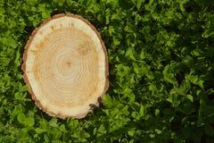 Пень дерева на траве, взгляд сверху Стоковое Изображение