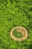 Пень дерева на траве с ying символ yang Стоковое Изображение