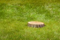 Пень дерева на траве Стоковые Изображения RF