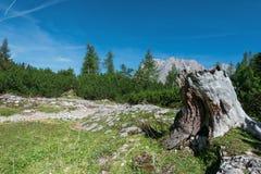 Пень дерева на луге горы на голубом небе Стоковое Изображение RF