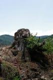 Пень дерева стоковые фотографии rf
