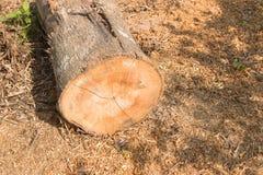 Пень дерева Стоковое Изображение