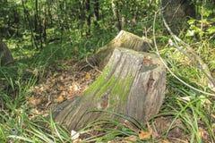 Пень дерева Стоковые Изображения RF