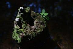 Пень дизайна природы Стоковая Фотография RF