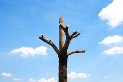 Пень и голубое небо Стоковое Изображение