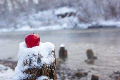 Пень и красное яблоко против фона зимы pond которая не замерзает во время заморозка, снега и береговой линии на реке Стоковая Фотография