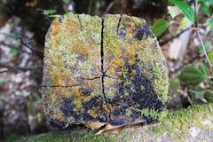 Пень крупного плана дерева в лесе Стоковая Фотография
