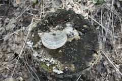 Пень леса с грибом на верхней и сухой траве вокруг стоковое изображение rf