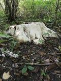 Пень покрытый грибком Стоковое Изображение