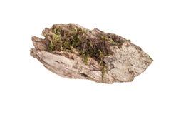 Пень при мох изолированный на белой предпосылке Стоковая Фотография