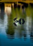 Пень птицы Стоковое фото RF