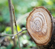 Пень древесины природа предпосылки зеленая напольно Стоковые Изображения RF