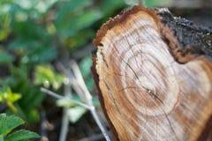 Пень древесины природа предпосылки зеленая напольно Стоковые Фотографии RF