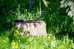 Пень среди лета деревьев Стоковое Изображение RF
