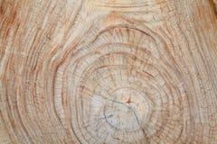 Пень старого teak деревянный Стоковая Фотография