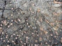 Пень с ногтями среды обитания ржавыми, концепция предпосылки, текстуры стоковые изображения rf