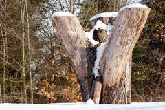Пень с снегом в лесе Стоковая Фотография