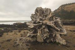 Пень Driftwood на скалистом пляже Стоковая Фотография