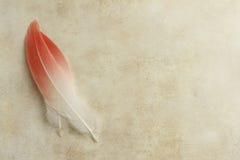 2 пера фламинго Стоковая Фотография