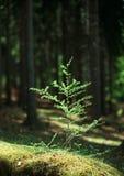 первая весна намека Стоковые Фото