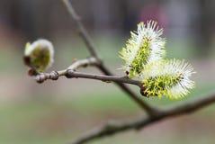 первая весна цветков стоковая фотография rf
