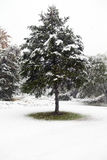 первая зима снежка Стоковые Изображения