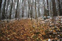 Первая прогулка снежка Стоковые Изображения RF