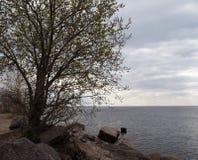 Первое дерево весны и серая вода стоковые фотографии rf
