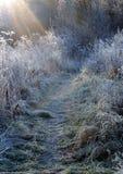 первое морозное утро Стоковая Фотография