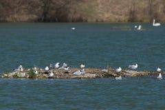 Первое солнце весны Чайки на озере стоковые изображения